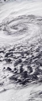 Storm Dennis Windfall
